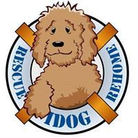 (6) IDOG Rescue - Labradoodle Goldendoodle Full Grown, Goldendoodle Names, Donation Sites, Doodle Dog, Poodle Mix, Rescue Dogs, Puppy Love, The Fosters, Your Dog