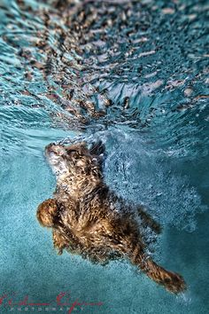 ... Underwater Pets on Pinterest Pet photography, Underwater and