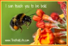I can teach you to be bold!