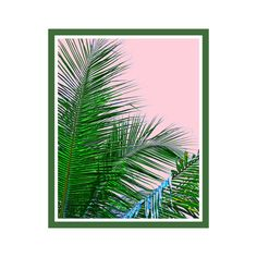 Palm Leaf Print Tropical Wall Art Nature Photography Large