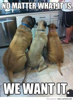 Funny animals with captions picture.funny animals ~ Funny images and Jokes Funny animals with captions picture.funny animals ~ Funny images and Jokes Humor Animal, Funny Animal Memes, Funny Animal Pictures, Dog Pictures, Funny Dogs, Funny Animals, Cute Animals, Funny Memes, Caption Pictures