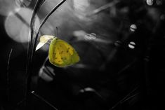 The New Butterfly by Donald Jusa on 500px