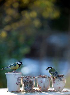 """syflove: """"birdies """""""