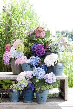 Lassen Sie sich inspirieren und zeig ihnen Kunden diese wunderschöne Bilder! Das ist die Stärke von #Pinterest!   #Hortensie #Inspiration