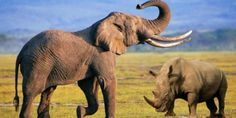 mamiferos - Buscar con Google