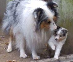 Gentle parental guidance