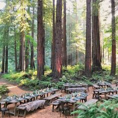 Rehearsal dinner in the redwoods was so beautiful @josevilla photography