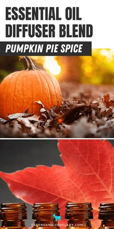 Fall essential oils not only smell great but are important to diffuse! Find out why and give this yummy pumpkin pie spice essential oil diffuser blend a try here! You'll be surprised how simple and easy it is to spread the essence of fall throughout your home. Check out this post and try it today! #EssentialOils #DiffuserBlends #NaturalLiving #Pumpkin #PumpkinPieSpice Fall Essential Oils, Ginger Essential Oil, Cinnamon Essential Oil, Essential Oil Diffuser Blends, Cinnamon Leaf Oil, Peanut Butter Buckeyes, Pie And Mash, Aromatherapy Recipes, Fall Dishes