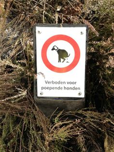 no shitting dogs