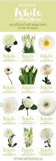 Save this awesome, in-depth White Wedding Flower Guide for names + types of White Flowers with Pictures, Season + Style Info! via @confettidaydreams