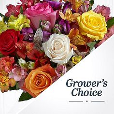 Here's one of the many privileges of working directly with the growers: offering flowers chosen by the growers themselves!  Each arrangement is made from stems chosen daily by our growers.  Leave it to the experts and let them choose beautiful flowers for you.