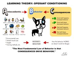 By: Melissa Kolmar, CPDT-KA We're going to delve a little into science today and talk about operant conditioning and positive reinforcement. One of the major learning theories is Operant Conditioning. ...
