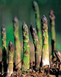 plant Asparagus this year (Let them grow without cutting for the first two years and then you will be able to harvest for the next 20)