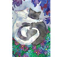'Soft Hearts Cat Friends ' by Niina Niskanen Framed Prints, Canvas Prints, Art Prints, White And Black Cat, Black Cats, Heart Poster, Soft Heart, Watercolor Paper, Cat Art