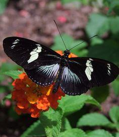 Butterfly Garden At Callaway Gardens