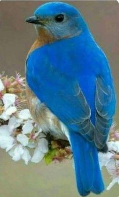 Ideas blue bird photography sweets for 2019 Cute Birds, Pretty Birds, Small Birds, Colorful Birds, Little Birds, Beautiful Birds, Animals Beautiful, Cute Animals, Yellow Birds