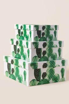 Cactus Box Set