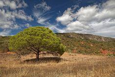 Portugal's own Table Mountain at Rocha da Pena. Photo courtesy Falk Lademann, CC BY-NC-SA Beyond The Sea, Table Mountain, G Adventures, Group Travel, Bird Species, Algarve, The World's Greatest, Wildflowers, Bats
