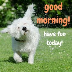 Good Morning! Have fun today!