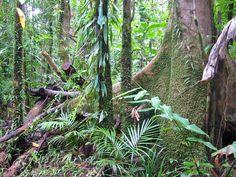 island jungle trees - Google Search