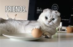 Hiro and the Egg, BFFs4Lyfe!!   This Cat Befriending An Egg Is Almost Too Adorable
