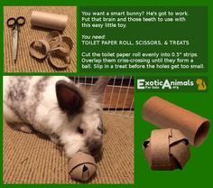 Bunny Food Ball -  DIY Bunny Rabbit Toys that are Cheap and Easy to Make. Awesome for all sorts of small animals. Bunny approved DIY Rabbit toys!