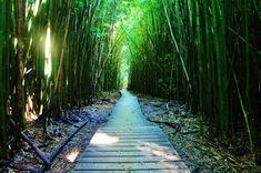 The Bamboo Forest and Waimoku Falls in Kipahulu, Maui - The Traveling Vixen Kapalua Hawaii, Maui Travel, Paths, The Good Place, Bamboo, Vixen, Fall, Traveling, Autumn