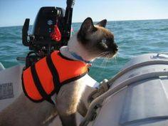 Furry fishing! – bailey boat cat