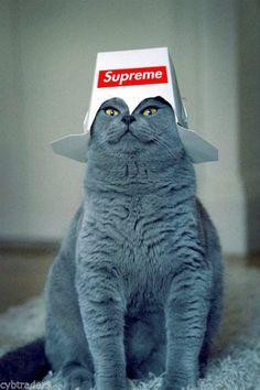 Funny Blue Cat Supreme  Refrigerator / Tool Box / File Cabinet Magnet