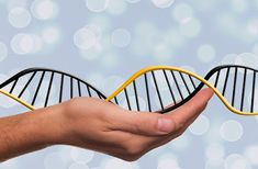 Epigenetics, is at the moment a number of the extraordinary areas of scientific evaluation.Our genetic make-up (DNA) is our blue print nonetheless new scientific discoveries are displaying that what we eat. Dna Testing Kits, Dna Kit, Recombinant Dna, Genetic Counseling, Dna Test Results, Dna Technology, Dna Repair, Ancestry Dna, September