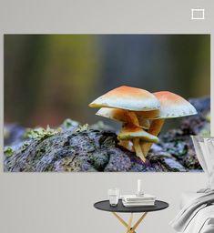 Heilooer bos, landgoed Nijenburg; Prachtige herfstkleuren in het bos, met Macrofoto van een groepje gewone zwavelkoppen op een boomstam. Canvas, Prints, Animals, Tela, Animales, Animaux, Canvases, Animal, Animais