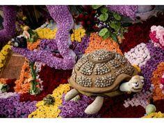 Rose Parade cute turtle