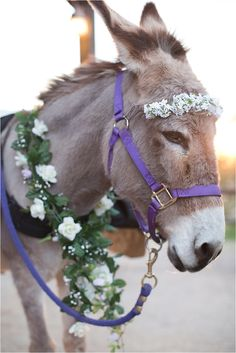 Beer Burro! Perfect addition to a Barn Wedding!