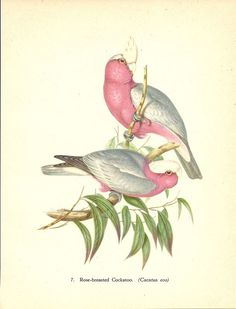 John Gould tropical bird print