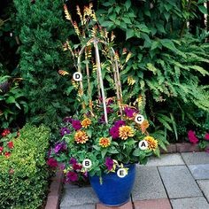Top Butterfly Container Garden Ideas: Try adding a vine: A. Zinnia haageana 'Persian Carpet' -- 2;  B. Petunia 'Ultra Blue' -- 3;  C. Coleus (Solenostemon 'Alabama Sunrise') -- 1;  D. Spanish flag (Ipomoea lobata) -- 1;  E. Vinca 'Illumination' -- 2