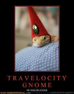Leopard Gecko Travelocity   Gnome