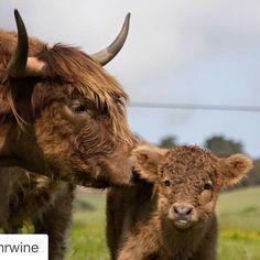 Awe ....babies! @lmrwine #napavalley #StHelenaCa #visitnapavalley by sthelenaca