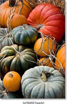 Autumn Aesthetic, Happy Fall Y'all, Autumn Day, Winter, Fall Harvest, Autumn Inspiration, Home Decor Wall Art, Fall Pumpkins, Fall Season