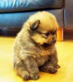 I look like a tiny teddy bear.