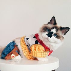 Albert Baby Cat dressed as Woody- so cute!! <3