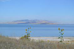 Antelope Island: Utah's Most Scenic State Park