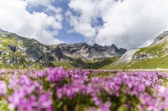 Crestasee Mountain Hiking, Switzerland, Trek, Places To Visit, Mountains, Nature, Next, Fitness Workouts, One Day Trip