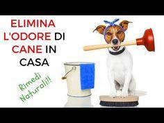 minzione frequente nei cani rimedi naturali