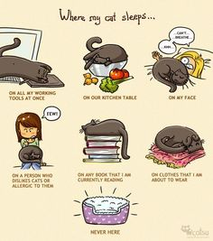 The one about sleep | Catsu The Cat