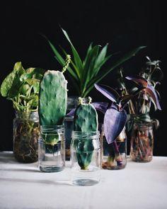 "Urban Jungle Bloggers™ (@urbanjungleblog) on Instagram: ""Today we're launching the April Edition of #urbanjunglebloggers : Plants & Glass! The first…"""
