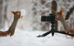 Diese Eichhörnchen sind so süß, dass Winter fast nicht mehr doof ist