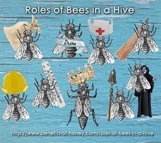 bee roles in a hive poster image