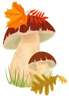Fall Mushrooms PNG Clipart Picture