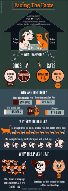 Infographic for ASPCA for my Graphic Design Student Project.