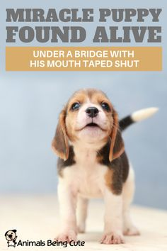 Miracle Puppy Found Alive Under A Bridge With His Mouth Taped Shut Inspirational Animal Quotes, Cute Puppies, Dogs And Puppies, Puppy Find, Warm Bed, Interesting Animals, Broken Leg, Animal Facts, Find Pets